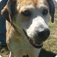 German Shepherd Dog/Hound (Unknown Type) Mix Dog for adoption in The Dalles, Oregon - Anya