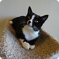 Adopt A Pet :: Rhea - St. Louis, MO