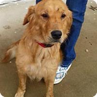 Adopt A Pet :: Kizzy - BIRMINGHAM, AL