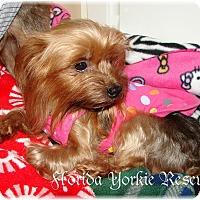 Adopt A Pet :: Willow - Palm City, FL