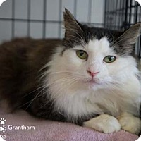 Adopt A Pet :: Grantham - Merrifield, VA