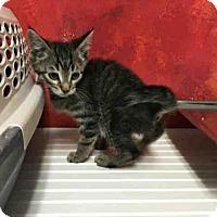 Adopt A Pet :: *ROGER - Bakersfield, CA