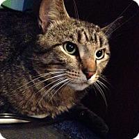 Adopt A Pet :: Sammy - Cincinnati, OH