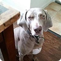 Adopt A Pet :: Maggie B - Aurora, CO