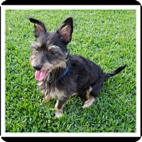 Adopt A Pet :: PEE WEE - Winchester, CA