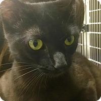 Adopt A Pet :: Skylar - Webster, MA