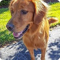 Adopt A Pet :: Jackson 721 - Naples, FL