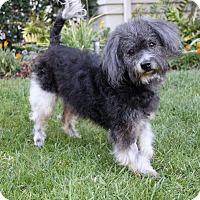 Adopt A Pet :: JT - Newport Beach, CA