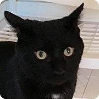 Adopt A Pet :: Jack - Franklin, WV