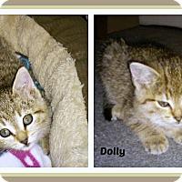 Adopt A Pet :: Daisy - New Richmond,, WI