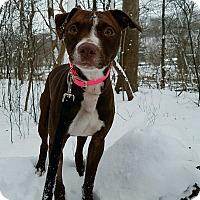 Adopt A Pet :: Hope - Elyria, OH