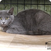 Adopt A Pet :: Fisher - Marlinton, WV