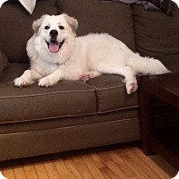 Adopt A Pet :: LANA - Kittery, ME