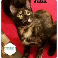 Adopt A Pet :: Julia - Plainfield, IL