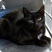 Adopt A Pet :: Maddie - Marlinton, WV