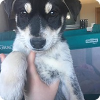 Adopt A Pet :: Parker - North Brunswick, NJ