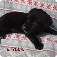 Adopt A Pet :: Skyler - Batesville, AR