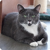 Adopt A Pet :: Toe - Wilmington, DE