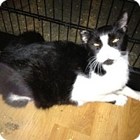 Adopt A Pet :: Lonna - Fort Lauderdale, FL