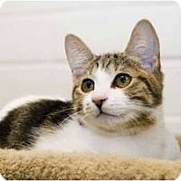 Adopt A Pet :: Lily - New Port Richey, FL