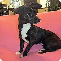 Adopt A Pet :: Marilyn - Mooy, AL