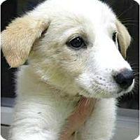 Adopt A Pet :: Jillian - Hagerstown, MD
