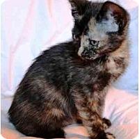 Adopt A Pet :: Nadia - Irvine, CA