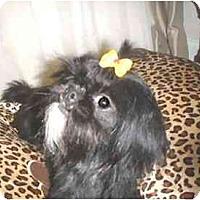 Adopt A Pet :: Mollye - Mooy, AL