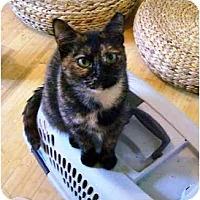 Adopt A Pet :: Iris - Wakinsville, GA