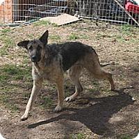 Adopt A Pet :: PHEONIX - Sebec, ME