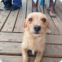 Adopt A Pet :: Teddy - Leming, TX