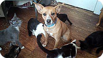 Terrier (Unknown Type, Medium)/Beagle Mix Dog for adoption in Seneca, South Carolina - Henryetta