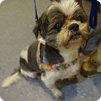 Adopt A Pet :: POPPI - Eden Prairie, MN