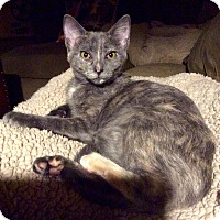 Adopt A Pet :: Lil - Edmond, OK