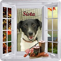 Adopt A Pet :: Sista - Crowley, LA