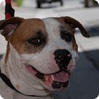Adopt A Pet :: Patrick - Beverly Hills, CA