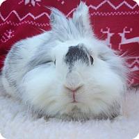 Adopt A Pet :: Oakley - Watauga, TX