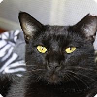 Adopt A Pet :: Marcus - Sarasota, FL