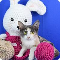 Adopt A Pet :: Kimmy - Carencro, LA