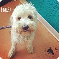 Adopt A Pet :: Fonzi - Redondo Beach, CA