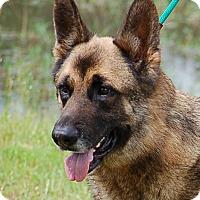 Adopt A Pet :: AJ AD 06-04-16 - Preston, CT