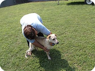 Blue Heeler/Pointer Mix Dog for adoption in San Antonio, Texas - Red