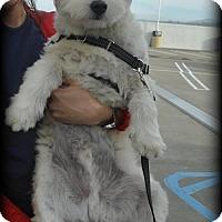 Adopt A Pet :: Mito - San Jose, CA