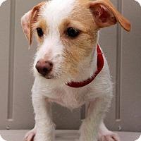 Adopt A Pet :: Elaina - Yardley, PA