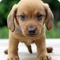 Adopt A Pet :: Hercules - Waldorf, MD