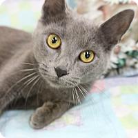 Adopt A Pet :: Sable - Medina, OH