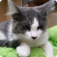 Adopt A Pet :: Neptune - Chula Vista, CA