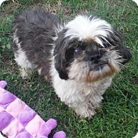 Adopt A Pet :: AVA PENDING - Alpharetta, GA
