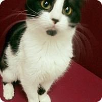Adopt A Pet :: Maizey - Muscatine, IA