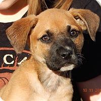 Adopt A Pet :: Wren (7 lb) Video! - West Sand Lake, NY